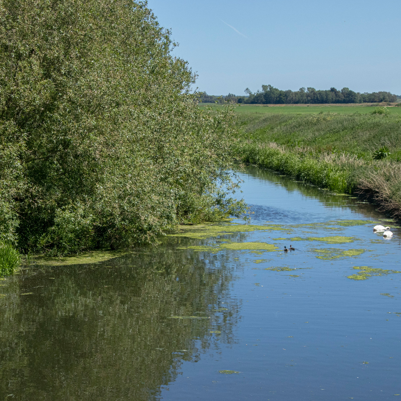 29th May 2020 _River Witham _Water Railw