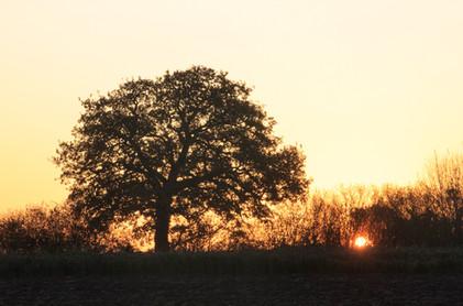 Sunrise from Tunman