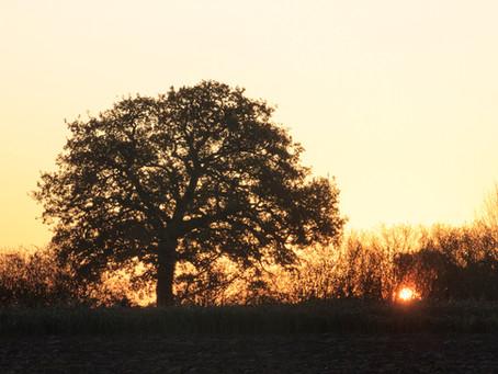 Latest Photos_ Autumn Sunrise