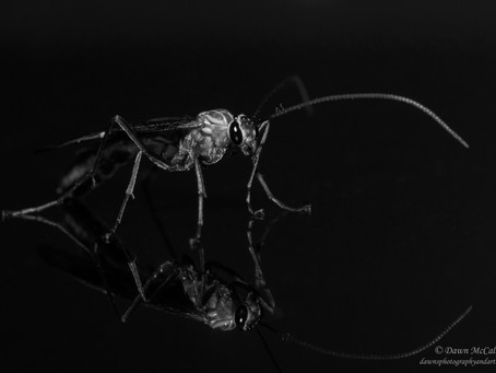 Latest Photos: Insect Portraiture