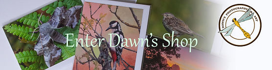 Dawn's Shop Header.jpg