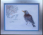 Fieldfare in the Snow with Frame_ Grey.j
