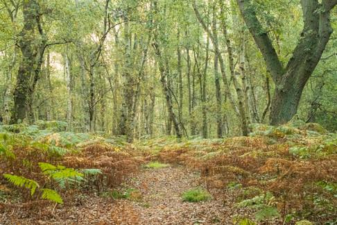 16th Septeer 2020 _Birch Woodland _Linwo