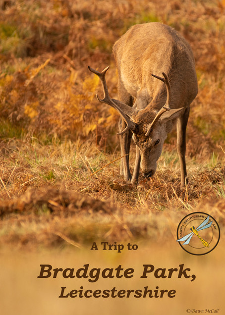 A Trip to Bradgate Park, Leicestershire