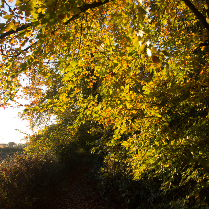 12th November 2017_ Tunman Wood Autumn Sunrise_ 04