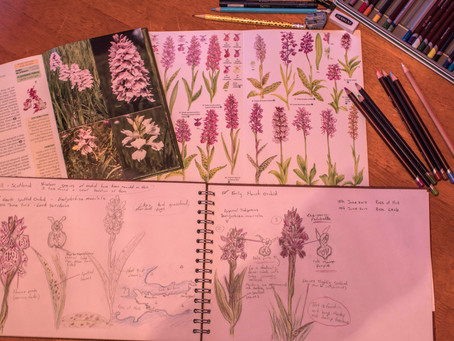 A Year of a Nature Journal