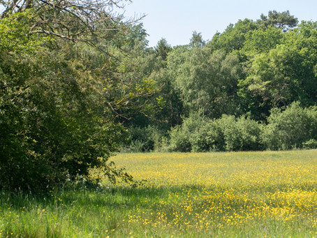 A Visit to Hatton Meadows