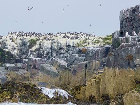 Britain's Habitats- Hard Cliff & Slope
