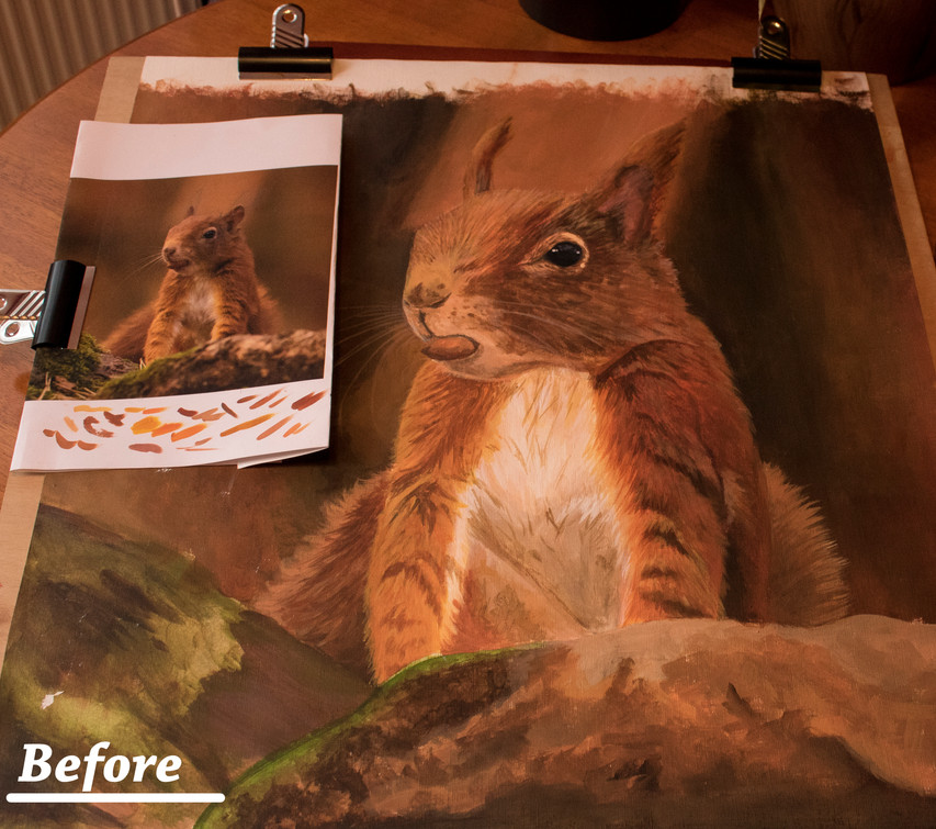Red Squirrel Before _1