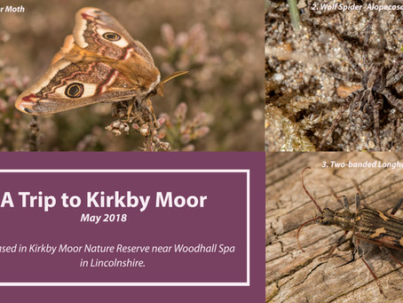 A Trip to Kirkby Moor