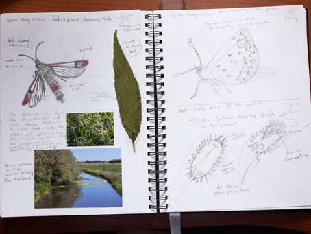 Through the Year with a Nature Journal 2020