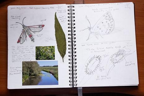 Nature Journal 2020 _ 4.jpg