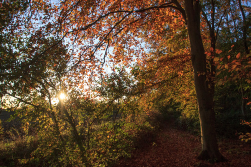 Autumn Trees at Sunrise, Tunman Wood