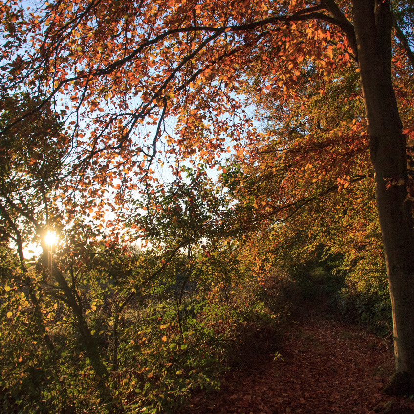 12th November 2017_ Tunman Wood Autumn Sunrise_ 06