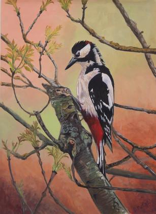 Great-spotted Woodpecker.jpg