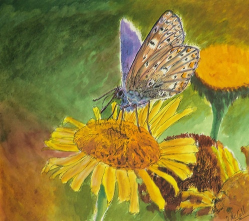 Common Blue Butterfly Original  in Pen & Ink