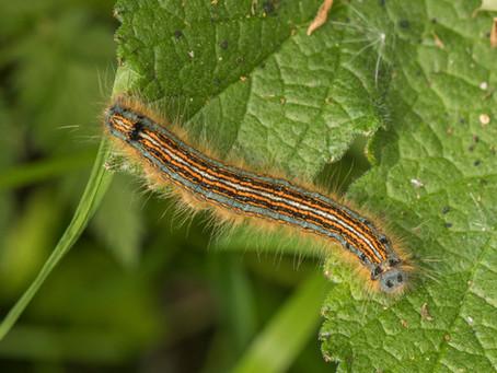 The Caterpillar Gallery
