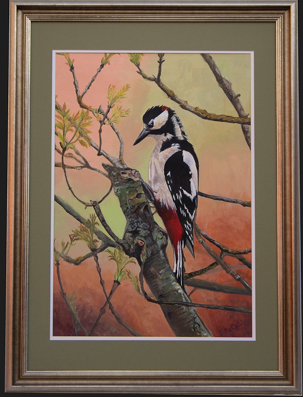 Great-spotted Woodpecker with Frame_ Gre