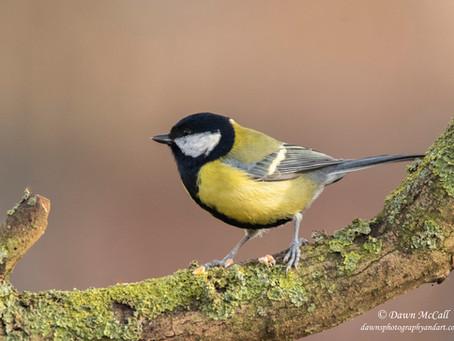 Techniques fromthe Field: Bird Feeding Station - Part 2