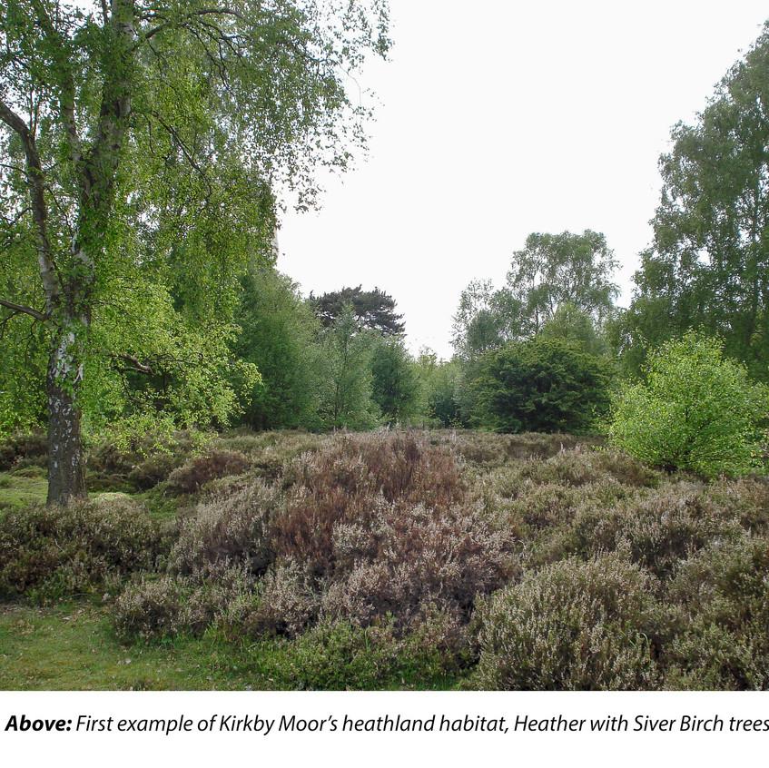 Kirkby Moor_ Habitat 1