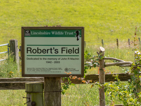 A look at Robert's Field, Holywell