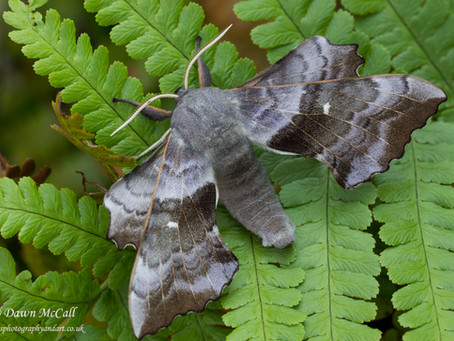 Moths in the Garden