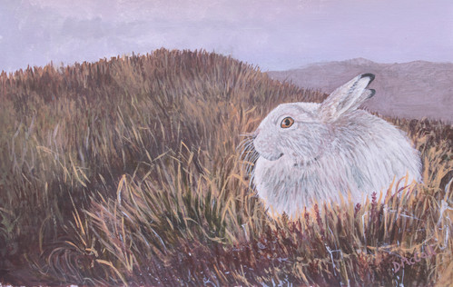 Mountain Hare Painting.jpg