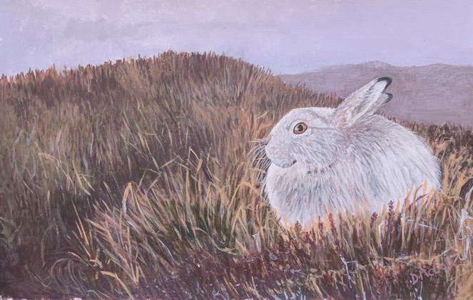 Mountain Hare Painting.jpg