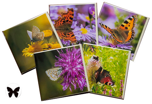 Butterfly Cards 5 Pack