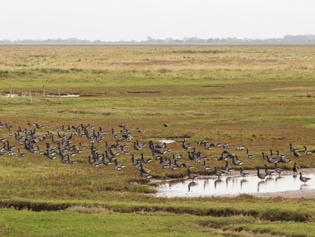 Britain's Habitats- Salt Marsh