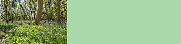 Woodland Button.jpg