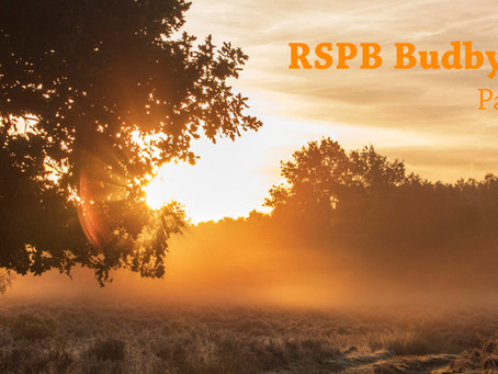 RSPB Budby South Forest_ Part 2