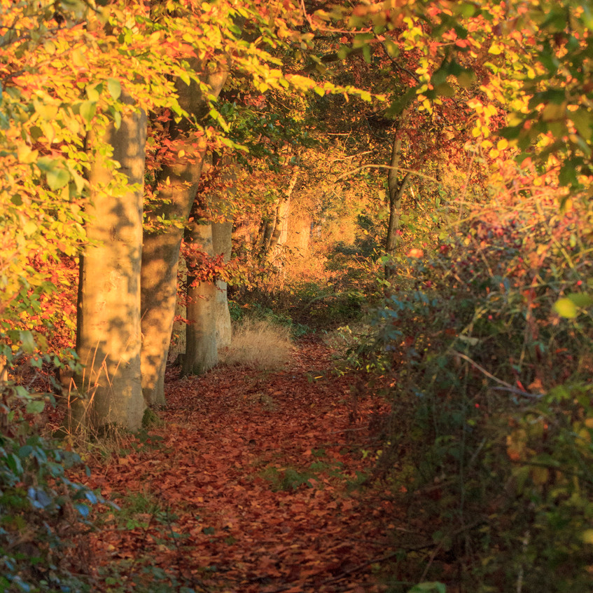 12th November 2017_ Tunman Wood Autumn Sunrise_ 15