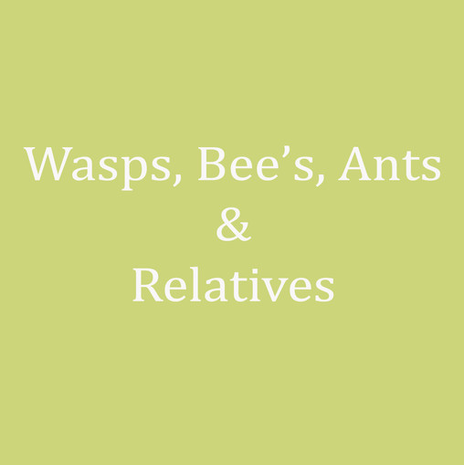 Wasps-Bee-Ants and Relatives.jpg