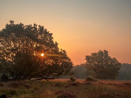 Latest Photos: Sunrise at Linwood Warren
