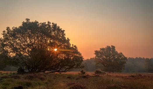Sunrise at Linwood Warran