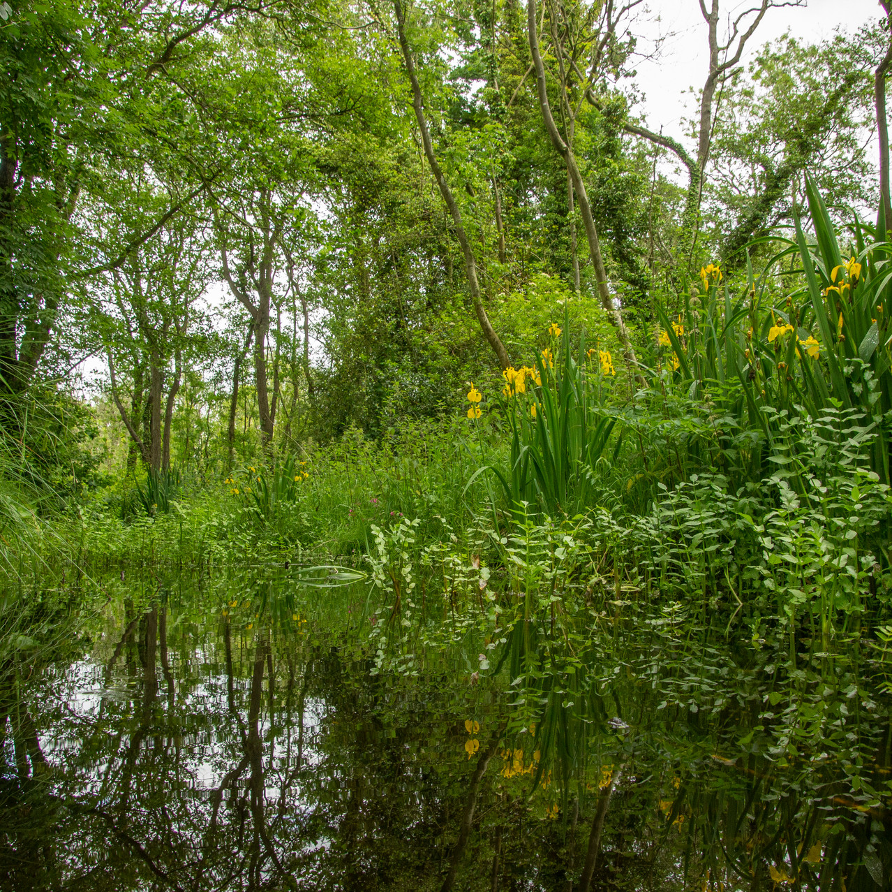 13th June 2019_  Upton Broad and Marshes