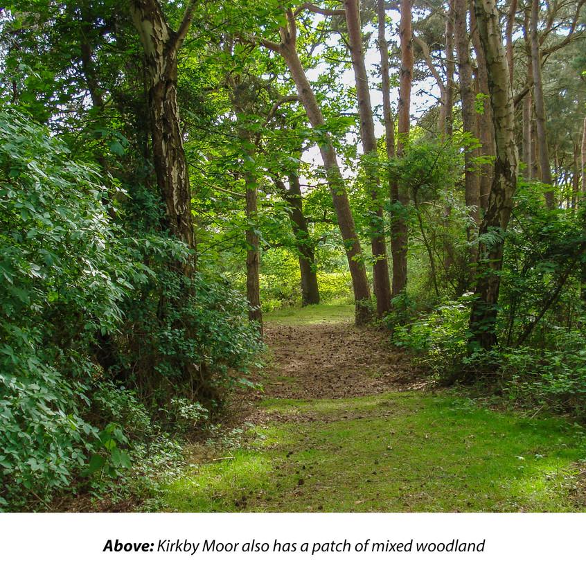 Kirkby Moor_ Mixed woodland