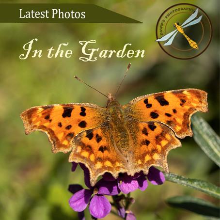 Latest Photos: In the Garden