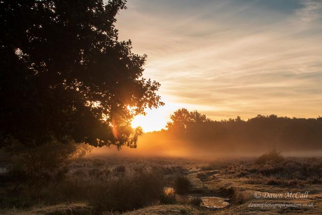 25th September 2018_ Budby Sunrise_ RSPB