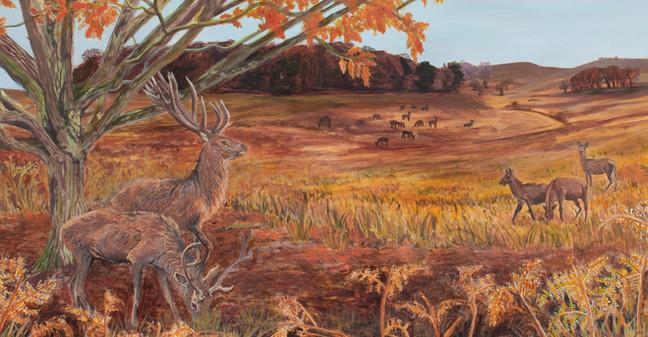 Red Deer at Bradgate Park.jpg