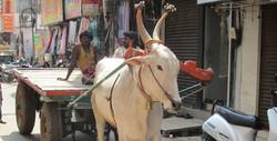 Chennai 2012 photo par Reiko