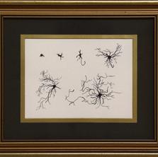 Development of a pyramidal neuron