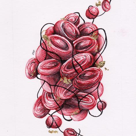 Blood clot and fibrin