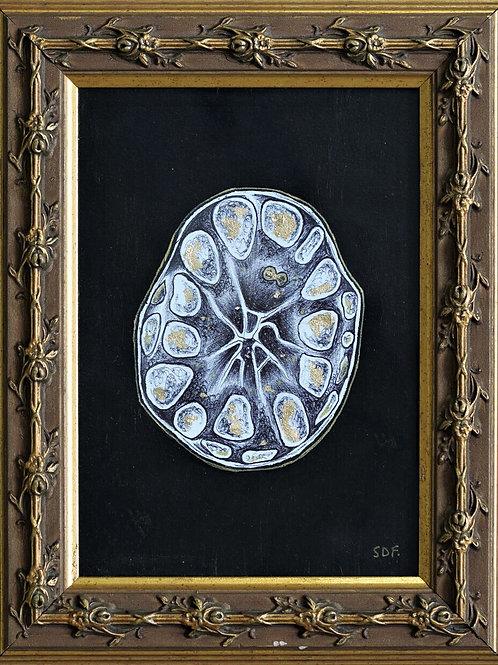 Rosette Cell