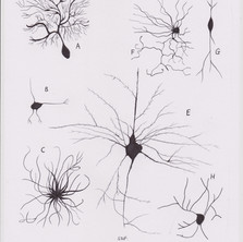 Neurones for Patricia