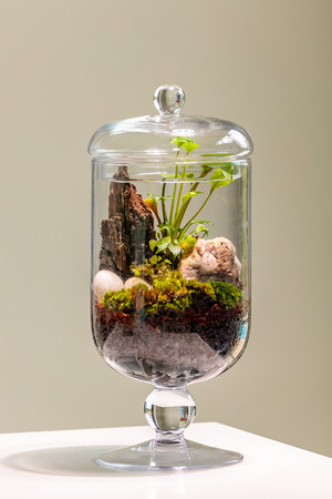 product-photography-plant.jpg