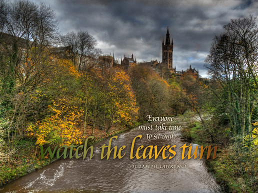 Watch The Leaves Turn