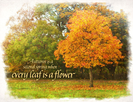 Every Leaf Is A Flower