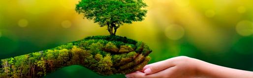 Educação_Ambiental_e_Sustentabilidade.pn